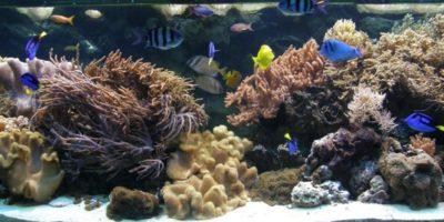 wśród atrakcji m.in.Gdyńskie Akwarium, wktórympoznać można 250 gatunków organizmów żyjących wmorzach ioceanach nacałym świecie orazCentrum Nauki Eksperyment wGdyni, gdzie poprzez zabawę dzieci poznają tajniki chemii czyfizyki.
