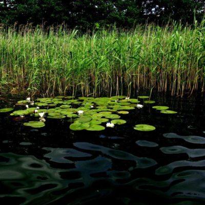 dsc04151 1024x797 400x400 Szlak kajakowy jezioro Patulskie Ostrzyckie rzeka Radunia