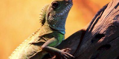 Miejsce, wktórymspotkać można wielkie węże, jaszczurki czyteż kolorowe papugi. Dzięki znajdującej się tam wystawie akwarystycznej zwiedzający mają możliwość zapoznania się zflorą ifauną lokalnych jezior.Odległość: 20 km