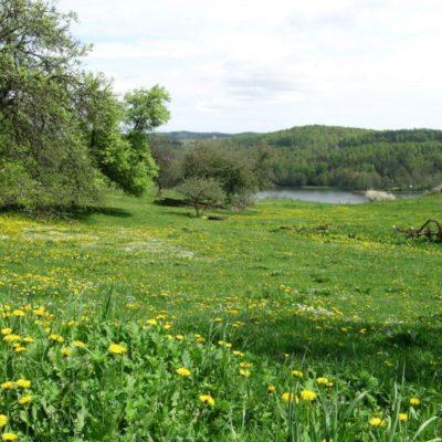 img 2381 1024x768 400x400 Trasa spacerowo widokowa wokół jeziora Patulskiego